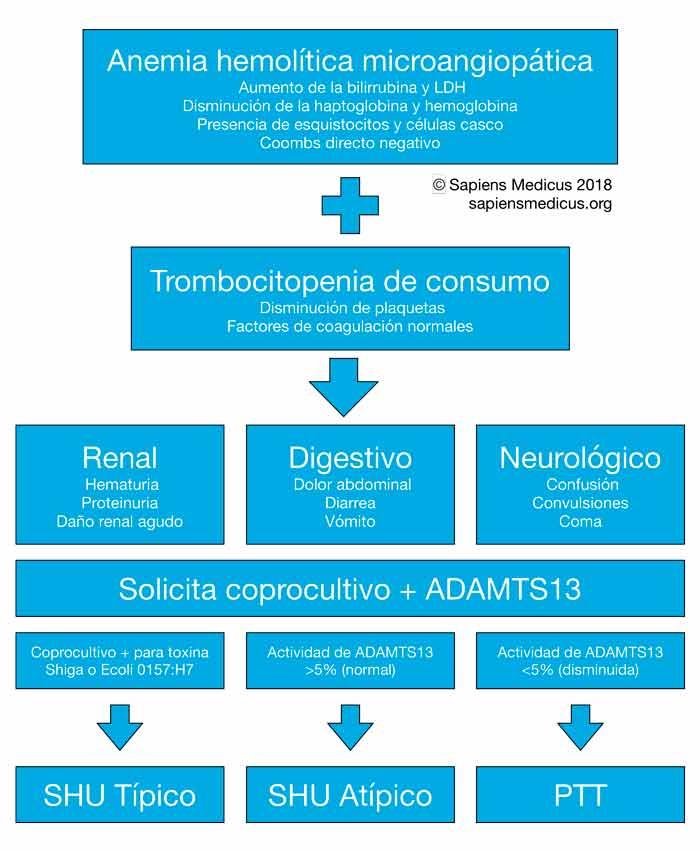Microangiopatía Trombótica: Síndrome urémico hemolítico y púrpura trombótica trombocitopénica.